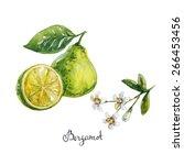 bergamot. watercolor... | Shutterstock .eps vector #266453456