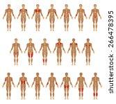 vector muscular human body ... | Shutterstock .eps vector #266478395