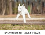 Funny Young Goatling Jumps In...