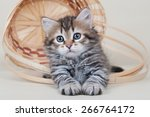 Stock photo siberian cats and kittens on white background 266764172
