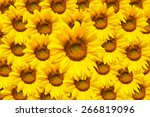 Yellow Sunflower Bloom In The...