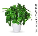 gardenia a potted plant... | Shutterstock . vector #266829332