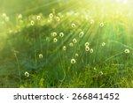 dandelions dawn | Shutterstock . vector #266841452