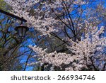 cherry blossoms at the... | Shutterstock . vector #266934746