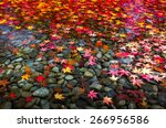 autumn foliage in japan. | Shutterstock . vector #266956586
