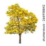 Tree Full Of Yellow Flower...