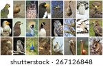 Collage of wild birds in the...