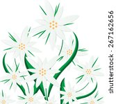beautiful edelweiss | Shutterstock . vector #267162656