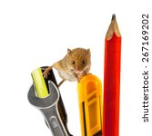 Harvest Mouse (Micromys minutus) climbing on repair tools, studio shot, as a concept for delayed project job - stock photo