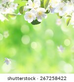 spring blossom background | Shutterstock . vector #267258422