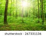 sun beam in a green forest   Shutterstock . vector #267331136