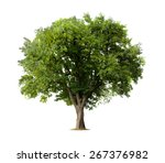 Stock photo apple tree isolated on a white background 267376982