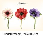 anemone  watercolor  can be... | Shutterstock .eps vector #267383825