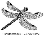 Detailed Dragonfly Pencil...