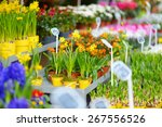 beautiful colorful flowers sold ... | Shutterstock . vector #267556526