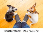 Stock photo two dogs begging looking up to owner begging for walk and play on the floor inside their home 267768272