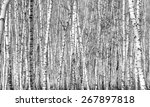 birch  black and white photo | Shutterstock . vector #267897818