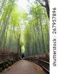 Arashiyama Bamboo Path  Japan