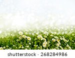 summer. background of flowers. | Shutterstock . vector #268284986