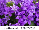 Purple Vase With Bluebells...
