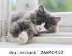 Stock photo picture of sleeping kitten on window ledge 26840452