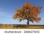 Cherry Tree In Autumn