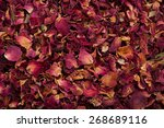 Dried Rose Petals Closeup...