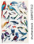 exotic birds  vintage engraved... | Shutterstock . vector #268937312