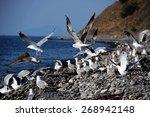 Flying Seagulls On The Sea Beach