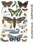 Butterfly Collection  Vintage...