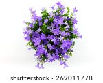 potted campanula... | Shutterstock . vector #269011778