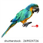 colorful macaw parrot sitting... | Shutterstock .eps vector #269024726