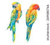 tropical birds isolated on... | Shutterstock .eps vector #269080766