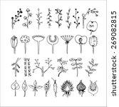 botanic set | Shutterstock .eps vector #269082815