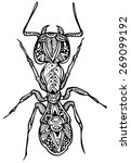 zentangle ant vector... | Shutterstock .eps vector #269099192