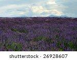 lavender field   Shutterstock . vector #26928607