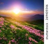 summer landscape | Shutterstock . vector #269405546