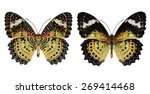 beautiful butterfly  malayan... | Shutterstock . vector #269414468