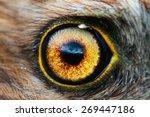 Bird Eye Close Up  Macro Effec...