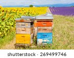 Bee Hives On Lavender And...