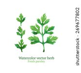 watercolor vector parsley | Shutterstock .eps vector #269677802