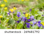 Spring Blossomed Flowers Of Th...