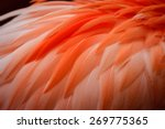 Close Up Of Flamingo Feathers