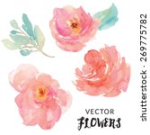 hand painted watercolor flower... | Shutterstock .eps vector #269775782