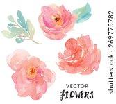 hand painted watercolor flower... | Shutterstock .eps vector #269775782
