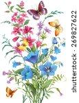 bouquet of wild herbs and... | Shutterstock . vector #269827622