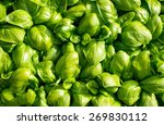 Large Green Aromatic...