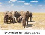 Herd of african elephants in...