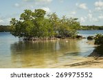 Mangrove Trees Along The Shore...