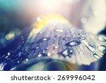 Colorfu Blue Flower With Rain...